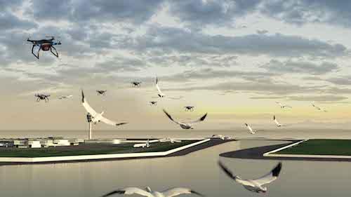 Guidage des oiseaux vers une aire de refuge grâce à des drones (« Birdport »)
